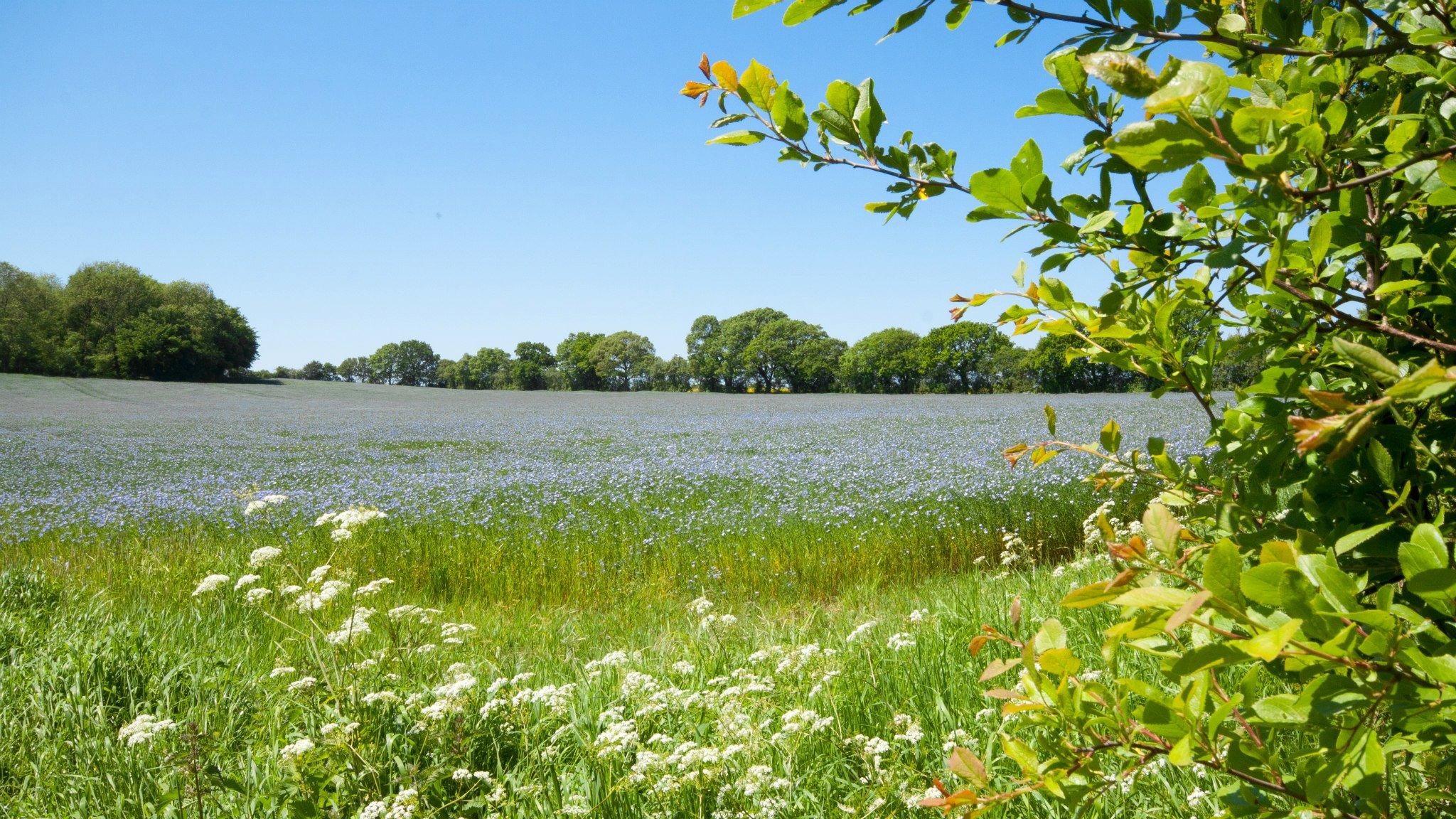 Considering the environment, Broadhembury, Fields